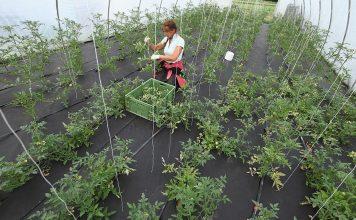 Noi oportunități de a câștiga din agricultură i-au văzut pe români