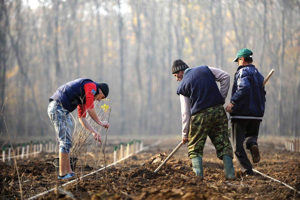 40 de milioane de euro pentru tinerii fermieri și 20 de milioane pentru împăduriri cacat